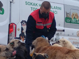 Tüpraş Continues its Support for Feeding Street Animals